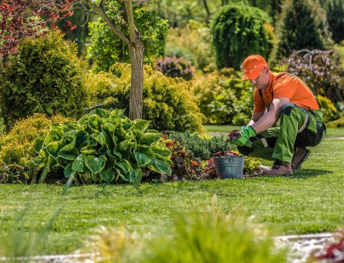 3 Ways A Landscape Maintenance Company Can Help Keep Your Soil Healthy